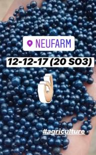 NEUBASE® NPK 12-12-17+20SO3